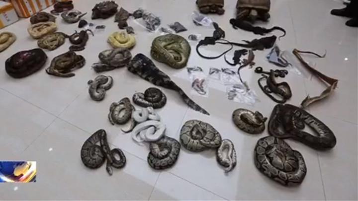 吉林破获非法收购出售濒危野生动物制品案,7人获刑