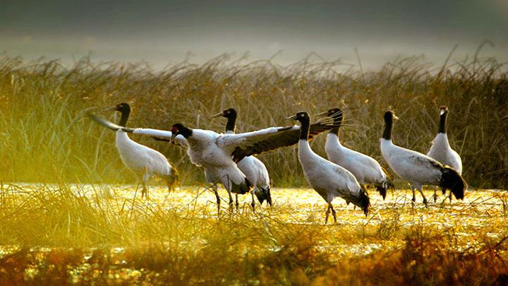 冬季养生观鸟首选之地,贵州毕节来长举办旅游推介会