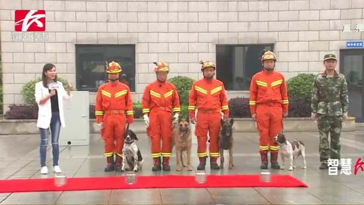 长沙市消防支队特勤大队三中队搜救班集体亮相,搜箱体、闻血迹、追踪,长沙明星搜救犬TM和可乐现场秀技。