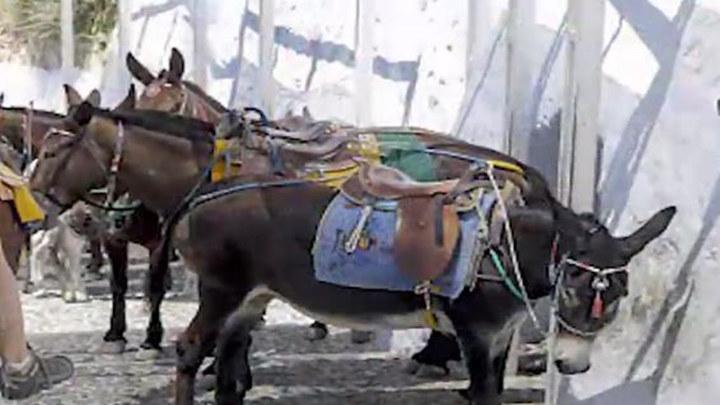 胖游客越来越多 希腊爱琴海的驴不堪重负被压脱皮
