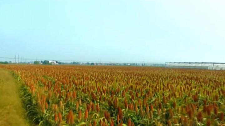 长沙年内将完成30万亩种植结构调整