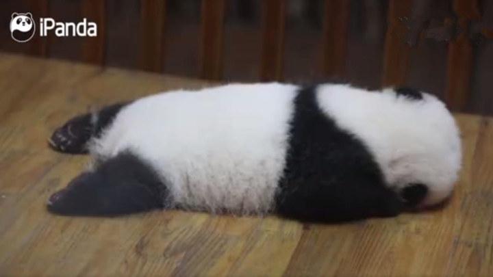 """熊猫宝宝cos""""胖海豚"""""""
