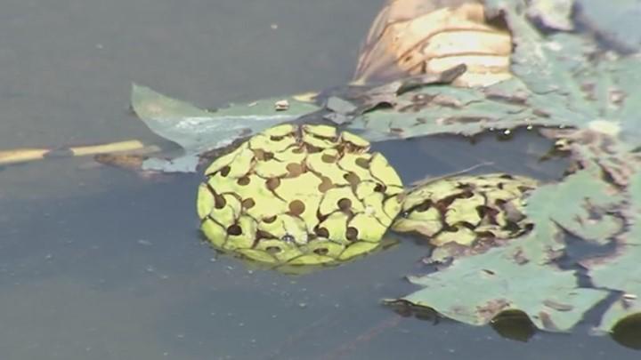 为给孩子摘莲蓬 男子疑似中暑晕倒荷花池内溺亡