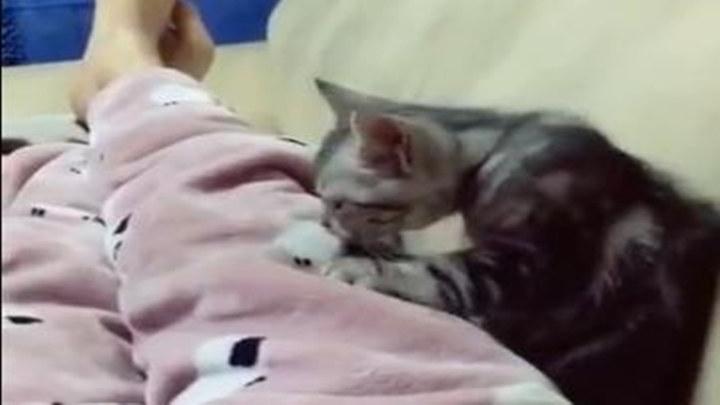 生活还是对我这只可怜的小猫咪下毒手了...