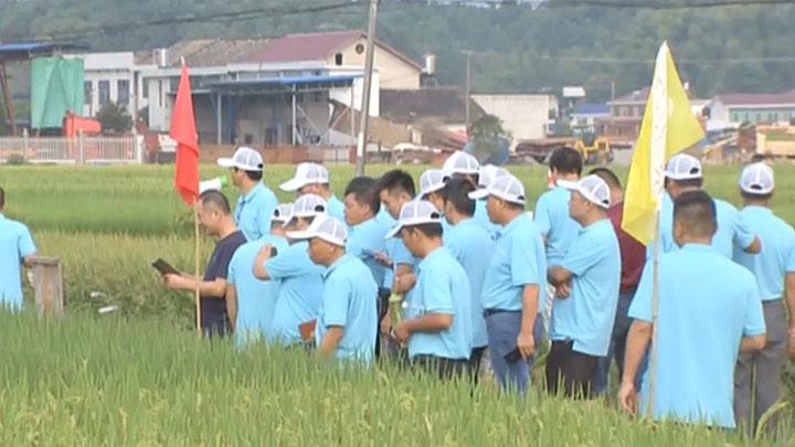 首届长沙种业硅谷峰会 业内人士点赞湖南超级稻