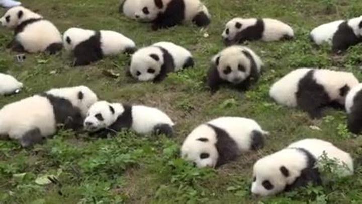 一个班全是熊孩子是种什么体验