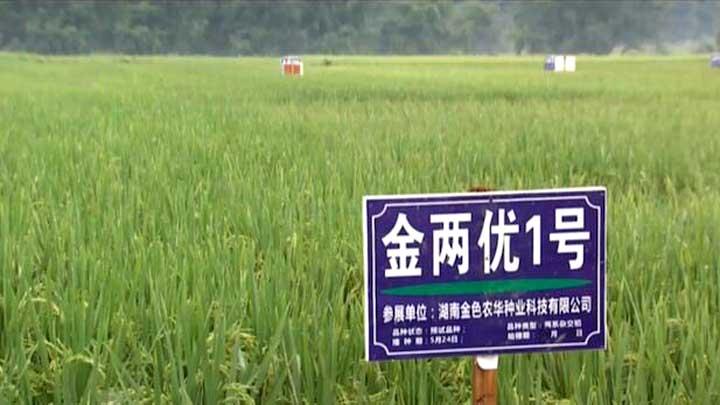 """长沙种业硅谷峰会""""开""""上田间地头 535个优良水稻品种汇集浏阳环园村"""