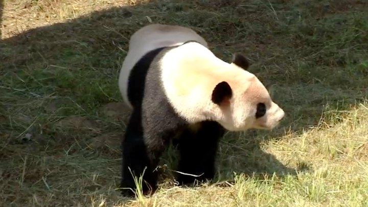 双胞胎大熊猫六岁了!十对双胞胎小朋友为其庆生