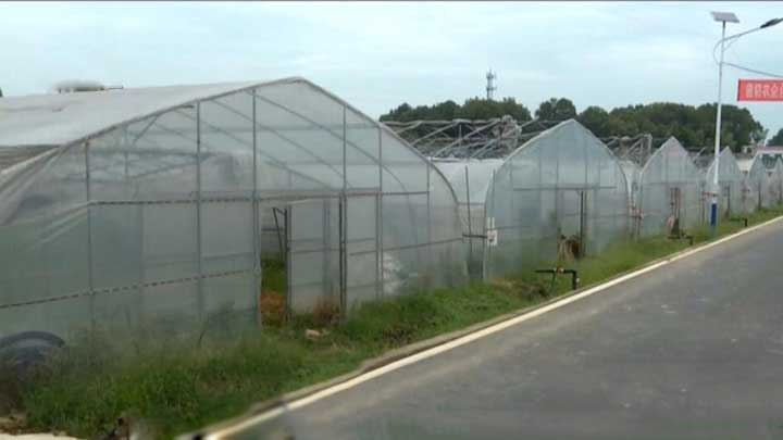 湖南省蔬菜有机肥替代化肥示范观摩会在浏阳举行
