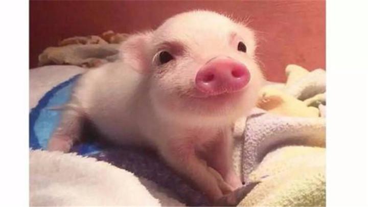 湖南关闭所有生猪交易市场 禁止从疫区及周边省份调入生猪