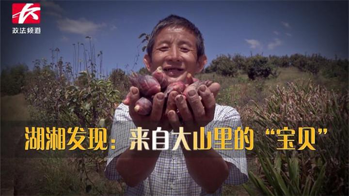 湖湘发现:来自大山里的宝贝