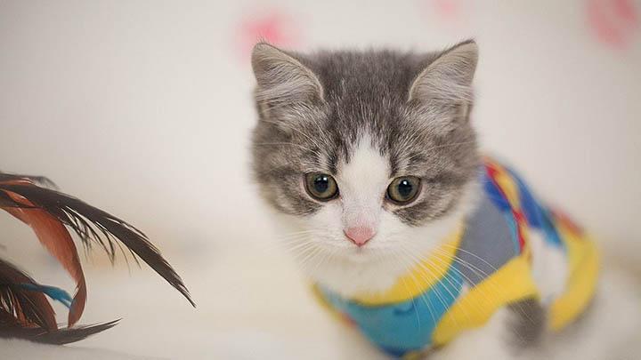 女子不满新发型回家打伤猫,还向理发店索赔治疗费
