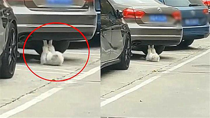 肥猫清晨车底忙健身,网友直呼:猫界竞争力都这么强了