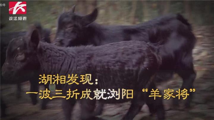 """湖湘发现:一波三折成就浏阳""""羊家将"""""""