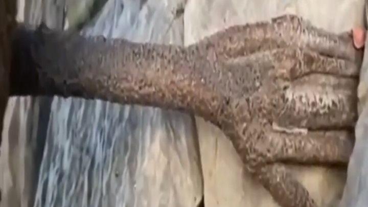 """奇特!3000年菩提树树腰上竟长出一只""""手"""":手指完整,扒进峭壁中"""