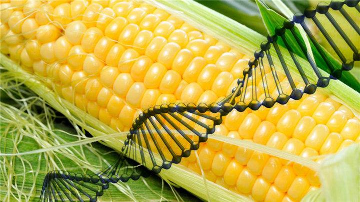 农业部新批准进口5种农业转基因生物