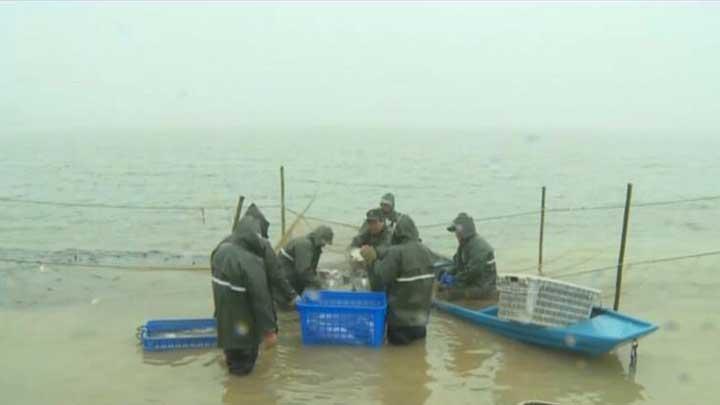 千龙湖迎来新年第一捕 30万斤鲜鱼供应长沙市场