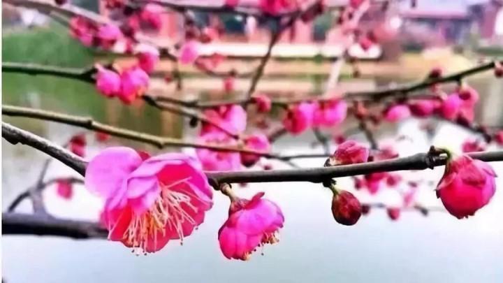 雨水今天放假,仅此一天,喜迎太阳!这份赏花攻略赶紧收藏!出门踏青去,不然雨水又来啦