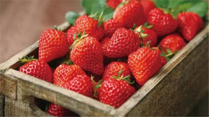 长沙喜迎太阳!这份草莓地图你需不需要啊!