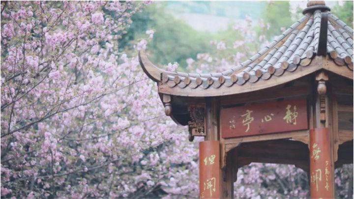 你是人间四月天,湖南图书馆4月精彩活动等着你