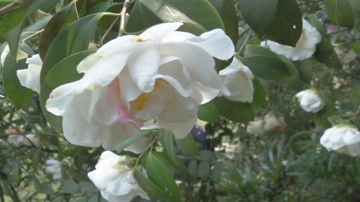 健康提醒:过敏高峰到来!户外踏春谨防花粉过敏