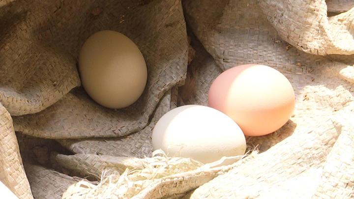 @长沙人!你买的土鸡蛋可能是假的!