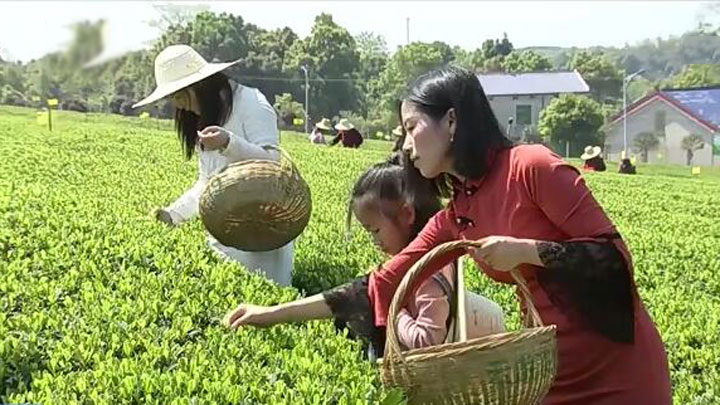 长沙推进茶产业供给侧改革 2022年长沙茶业综合产值将达百亿元