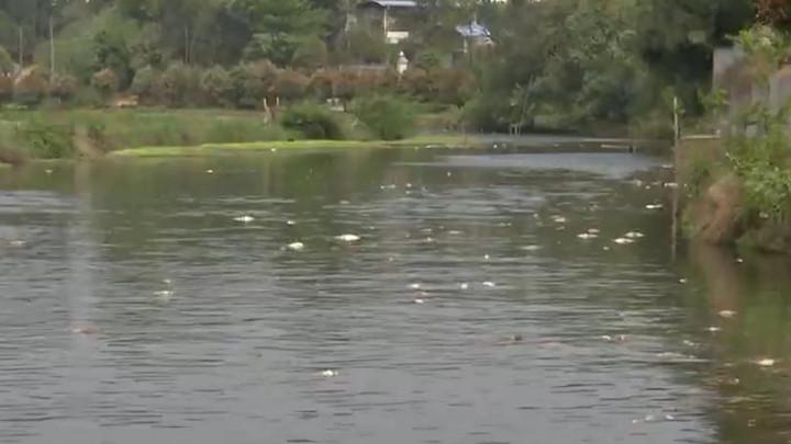 长沙县16亩鱼塘鱼苗离奇死亡,警方已介入调查