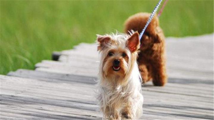 长沙市养犬新规正式实施 规范养犬势在必行