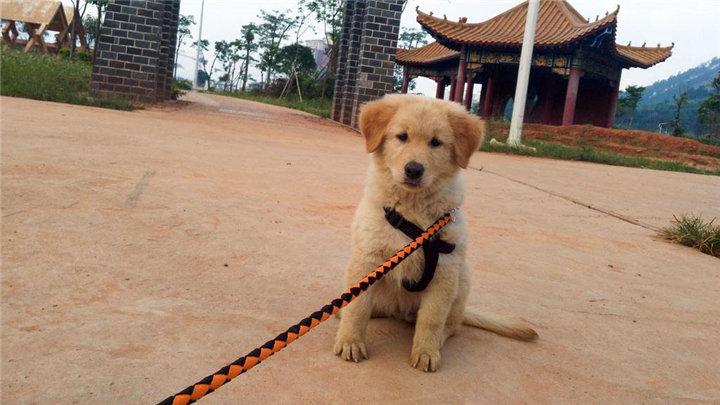 长沙市养犬新规正式实施 市民文明养犬意识明显提高