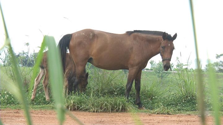 绿化带有人养马?还不止一匹!长沙一小区门外秒变养马场,业主惊呆了!