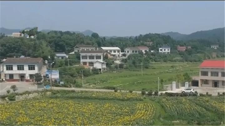 """全力推动乡村振兴望城群力村:种植结构调整让土地""""更值钱"""