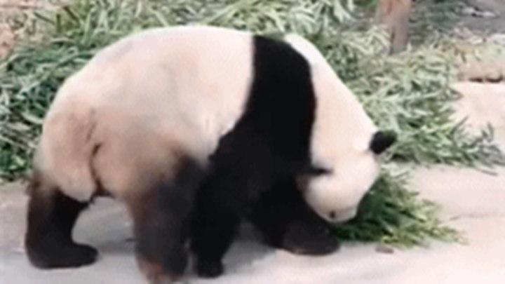 国宝都敢砸?北京动物园这样回应…