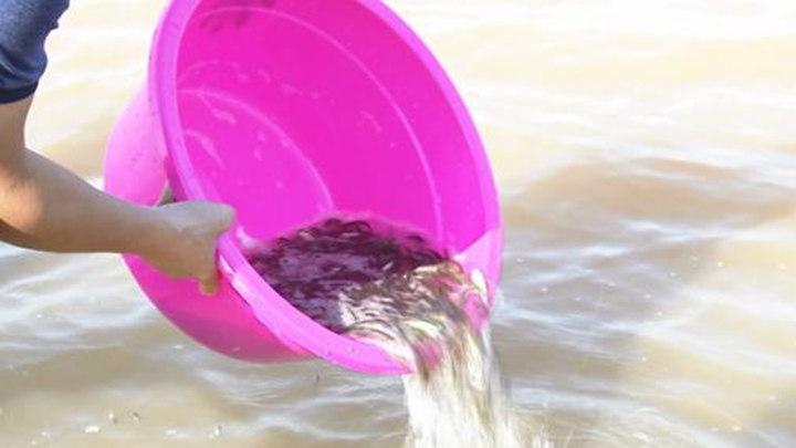333万尾鱼游入湘江!天心区举行鱼类增殖放流活动