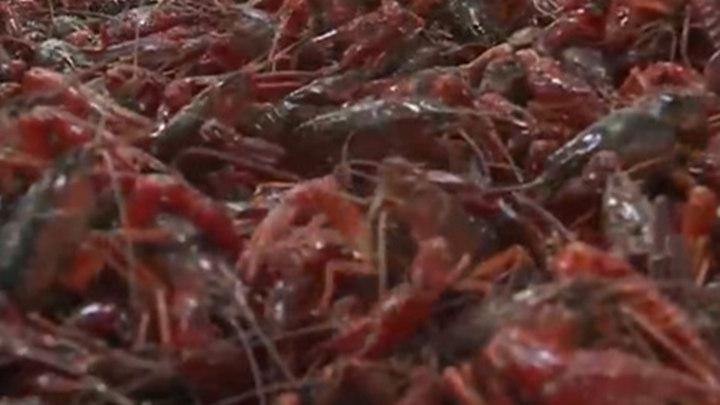各位吃货注意!小龙虾降价了,暴跌35%!