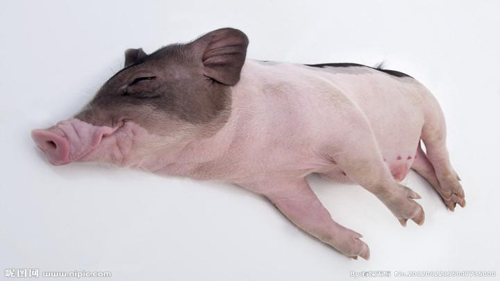 """猪肉价为何抑制不住?专家:""""贴秋膘""""是猪肉阶段性上涨原因之一"""