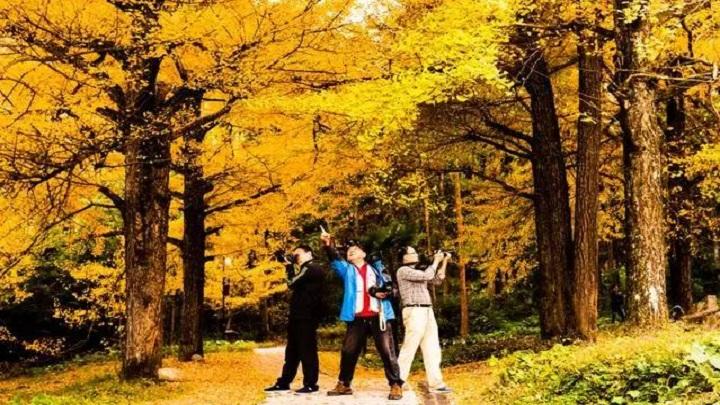 太惊艳!湖南最美的秋天 就藏在这5个地方!
