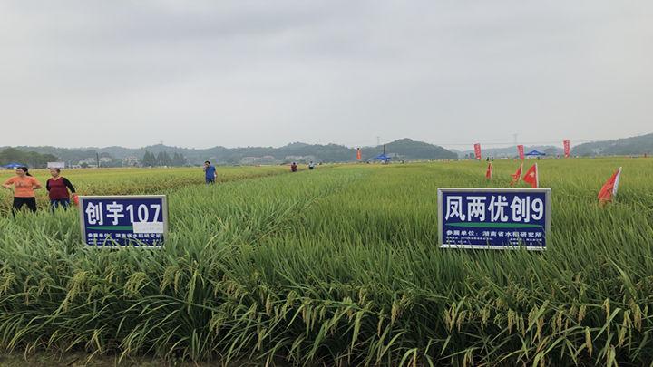 2019年国家长江中下游(长沙)水稻新品种展示示范观摩会举行
