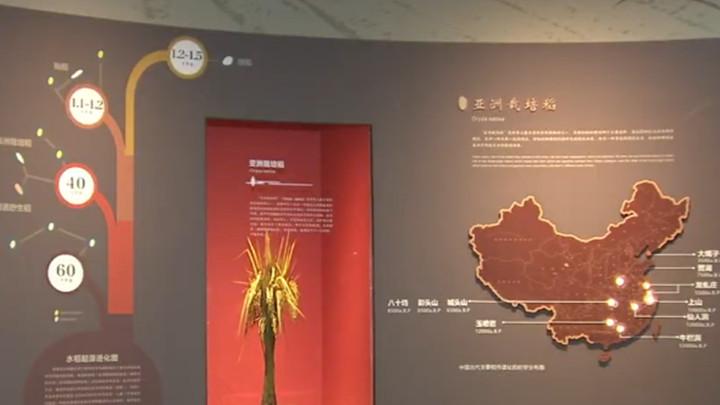 隆平水稻博物馆国庆七天不打烊